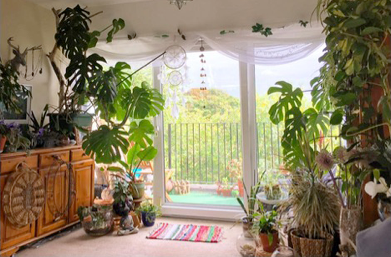 Indoor area decorated with plants