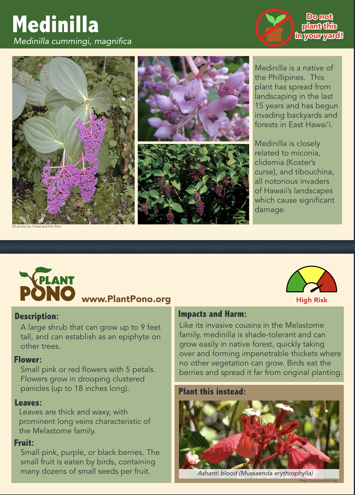 High-risk Melastomataceae (Medinilla)