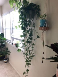 Pot plants hanging on a white wall